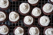 Mini chocolate cupcakes with bttercream on a cooling rack