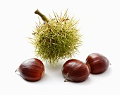 Chestnuts and a prickly case
