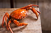 A crab on a wooden table