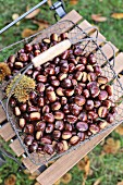 Edible chestnuts in a wire basket on a garden chair