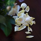 Fallen rose petals