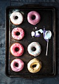 Doughnuts with colourful icing on a baking tray