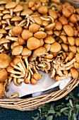 Nameko mushrooms (pholiota nameko)