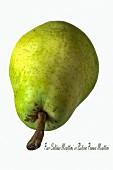 A Santa Maria pear