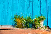 Three flower pots against a wooden wall painted turquoise