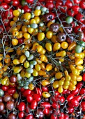 Viele verschiedene Tomaten (bildfüllend)