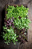Various types of cress in a wooden box