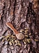 Kardamom, ganz und gemahlen, mit Holzlöffel auf Baumrinde