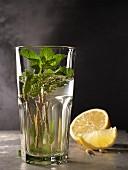 Minztee im Glas mit Minzezweigen und Zitrone