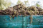 Weintraubenrispen nach dem Entrappen auf Holzwagen