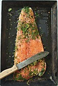 Home-cured salmon with dill and lemon zest (seen from above)