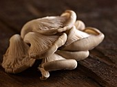 Fresh oyster mushrooms on a wooden surface