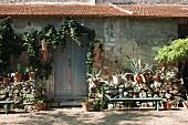 Agaven in Pflanzentöpfe auf halbhoher Steinmauer vor rustikalem Natursteinhaus