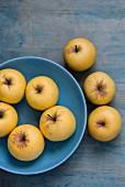 Frische gelbe Äpfel auf blauem Teller