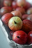 Red gooseberries in a cardboard punnet