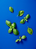 Basil leaves on a blue surface (seen from above)