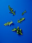 Rocket leaves on a blue surface
