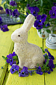 Chocolate Easter bunny in circle of violas