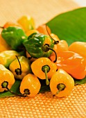 Green and yellow Habanero peppers