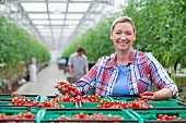 A portrait of an agricultural producer standing in front of crates of tomatoes in a greenhouse