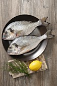 Two sea bream on a plate with lemon and dill