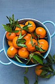 Mandarins with leaves in a blue colander