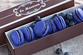 Blaue Heidelbeer-Macarons