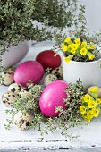 Easter decorations with coloured eggs, thyme, primroses and quails eggs