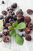 Frozen blackberries and blueberries with blackberry leaves
