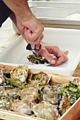 Oysters being opened at a wedding