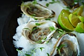 Raw oysters in half shells with herbs and limes