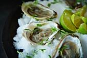 Rohe Austern in den Schalenhälften mit Kräutern und Limetten