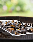 Mussels in an aluminium frame on a barbecue