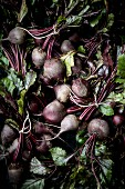 Bundles of beetroot with leaves