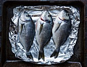 Three raw sea bream on aluminium foil on a baking tray (seen from above)