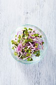 China rose sprouts in a glass bowl (seen from above)