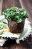 Radish cress in a old copper pot