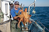 A fisherman holding a freshly caught octopus, South France