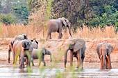 Elefanten an Wasserstelle, Sambia, Afrika