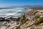 Walker Bay in the Grootbos Nature Reserve (South Africa)
