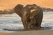 An elephant at a watering hole, Africa