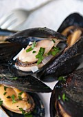 A close up of steamed mussels