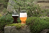 A glass of dark beer and a wheat beer in a forest