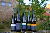Bottles of organic wine from the Gysler vineyard, Rhine Hesse, Germany