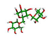 Amylopectin molecule