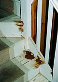Dry rot affecting wooden staircase