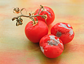 Mouldy tomatoes