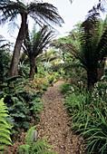 New Zealand Walk at Heligan Gardens