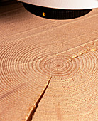 Tree growth rings