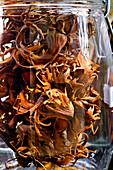 Turkish hazel nuts,Corylus colurna